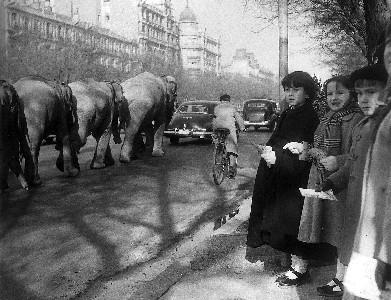 Madrid anos 50. Paseo de la Castellana. Desfile del circo.