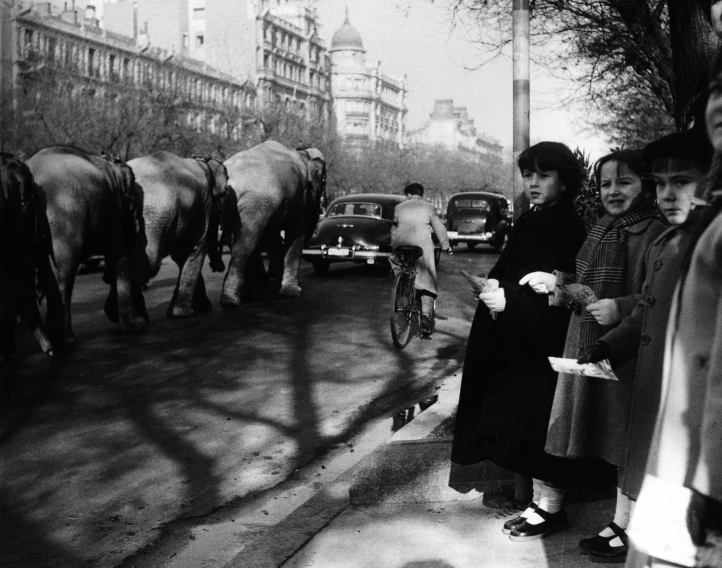 La foto de la semana: Paseo de la Castellana. Desfile del Circo. Años 50